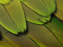 feathers of peridot by piratewench831