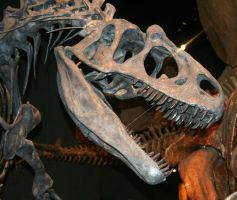 Denver Museum Prehistoric 528 by Falln-Stock