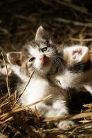 Kittens by urnixie
