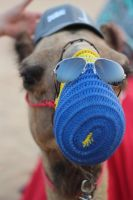 I am a cool camel by iAiisha