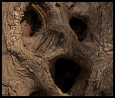 tree face.... by tanares8