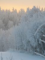 white forest 3 stock by PhotoFrama