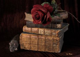 Library Rat by Hope72