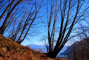 Black hornbeams and mountains by WelshGlue
