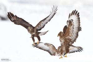 Snow Buzzards by BogdanBoev