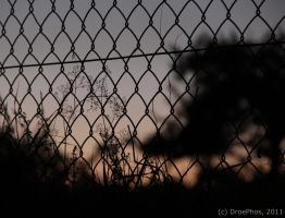 Plants, Sunset und a Fence by DroePhos