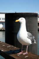 Seagul by Toefje-Kunst