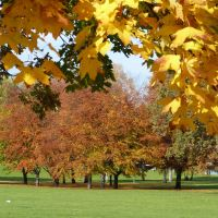 Park side colours by andersvolker