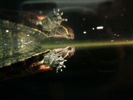 Double the Turtle by BengalTiger4