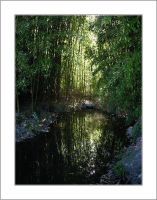 Bamboo Reflections by assimilated