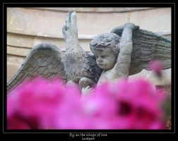 fly on the wings of love by lucaport