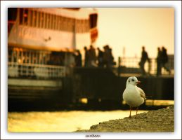 Seagull's in the city... by EmreKaanSezer