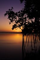 Mangrove Sunrise by Christian1776