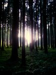 Forest Glow 2 by AbysmalPictures
