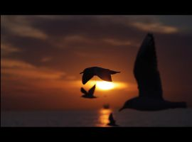 sunset and seagulls by Hendrix84