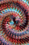 NOT a Spiral Fractal.... by Lady-Compassion