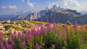 Dolomiti Italy Flowers autumn by StefanPrech