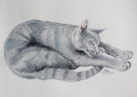 Russian Blue -Gift- by Miahii