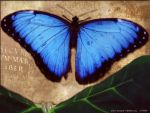 Butterfly by Rubyred1