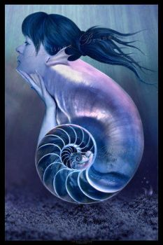 :: The shell seeker' :: by Sea-Creatures
