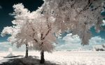 White Trees Part V by myINQI
