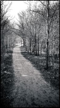 The Path Less Traveled by sidpena