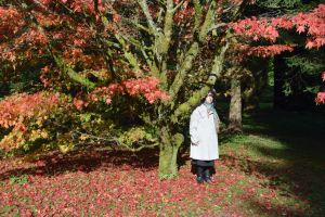 Red And Green Maple In Westonbirt Arboretum by aegiandyad