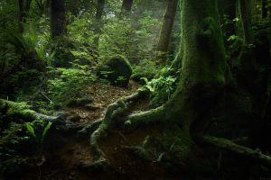 The Old Forest by erynlasgalenphotoart