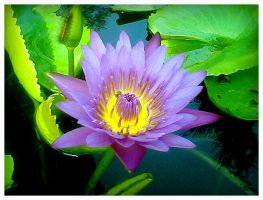 Lotus 2 by Mr-Ripley