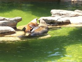 Sunbathing Sealions by FantasyBri