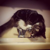 Momo Drinking Water by DarlingChristie