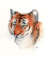 Tiger watercolor by iFrameX-2