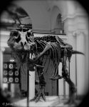 Sue the T-Rex by JohnyNoir