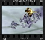 Bee Positive by ChrissieCool