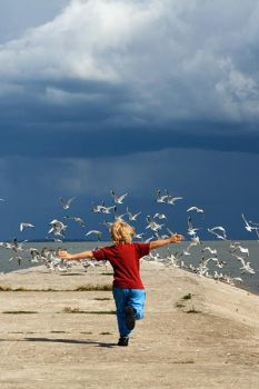 Chasing Seagulls by freeminds