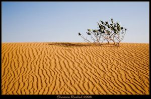 Lonely in the desert by shamsa95