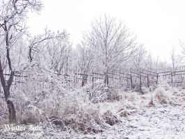 Winter's Tale - White forest by DionisDei