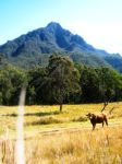 Mt Barney Cow by LJXD