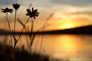 Sunset through the weeds by SonjaPhotography