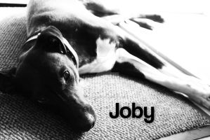 My Dog Joby by WillZMarler