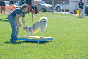 2014 Dog Festival, Agility Contest 6 by Miss-Tbones