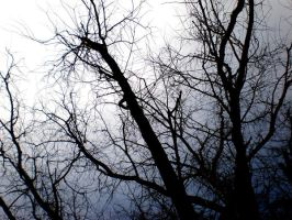 Branches by Naaancy