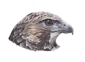 Hawk painting by MeEmilee