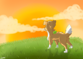Watching the sun go down by LouPup