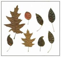 8 feuilles by ShadyMedusa-stock