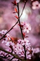 The Blossoming by DismayedSense