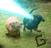 Dachshund Hyper Beam by Another-Random-Guy