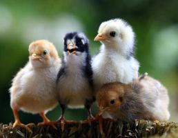 Real Chicks by PatriciaVazquez