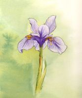 Iris by glassonion14