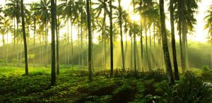 Location of Country Life by yuniarko